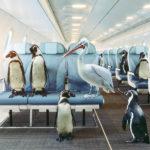 Путешествие с домашними животными в частном самолете